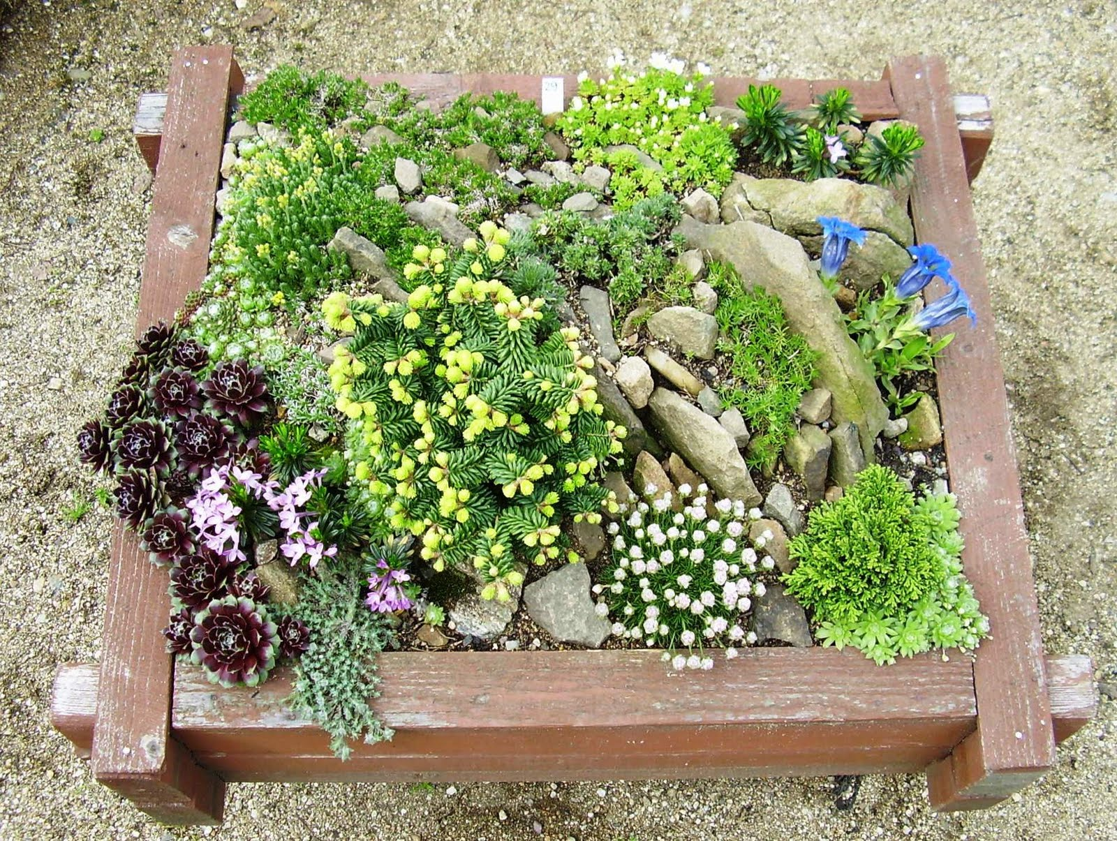 Rock garden ideas for your lovely house midcityeast for Outdoor landscape plans