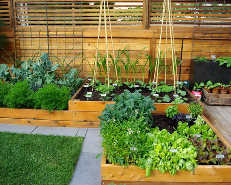 Inspiring Small Vegetable Gardens To Maximize The Area Of Small Patio