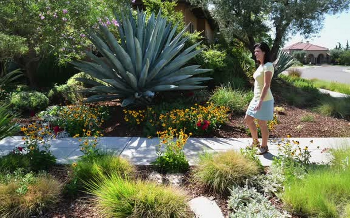 Make simple fresh and modern drought tolerant landscaping for Landscaping plants