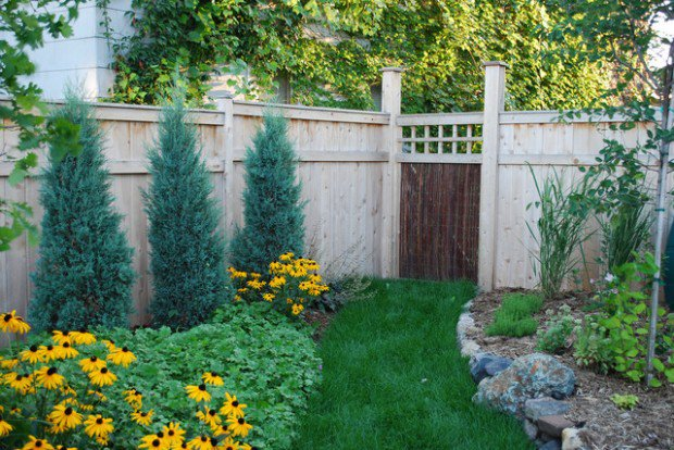 Horrible Pine Trees also Yellow Sunflower plus Grasses and Fence