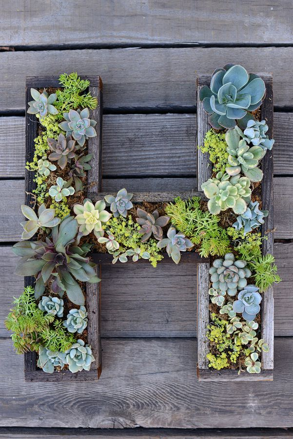 Marveoulus Design Picture for Mounted Succulent Letter with Wooden Element