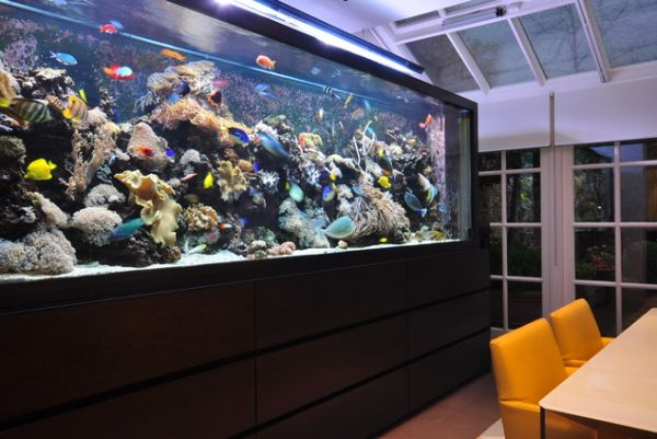 Simple Decorating for Big Aquarium with Dark Color and Wooden Element