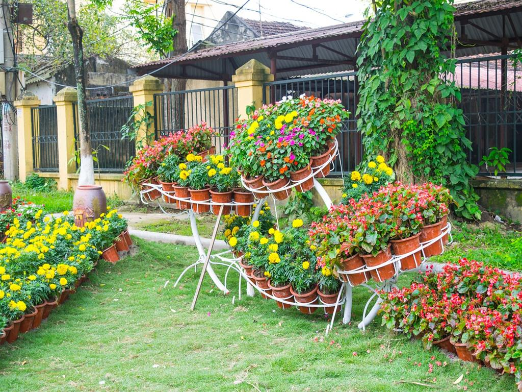 Yellow and Red Flowers for Unique Flower Garden Ideas with Brown Pots and Grass Area