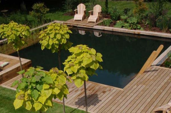 Winning Wooden Deck and Chair For Shipping Container Pool Decor