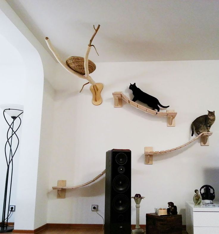 Magnificent Interior Room With Fantastic Cat House On Wall