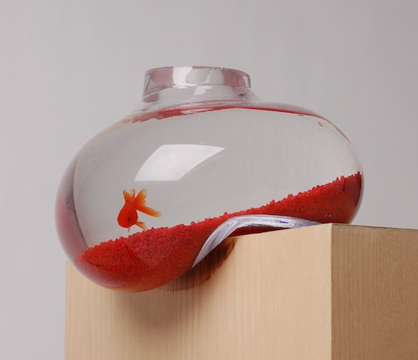 Simple Design Of Glass Modern Fish Tank For Saving One Animal