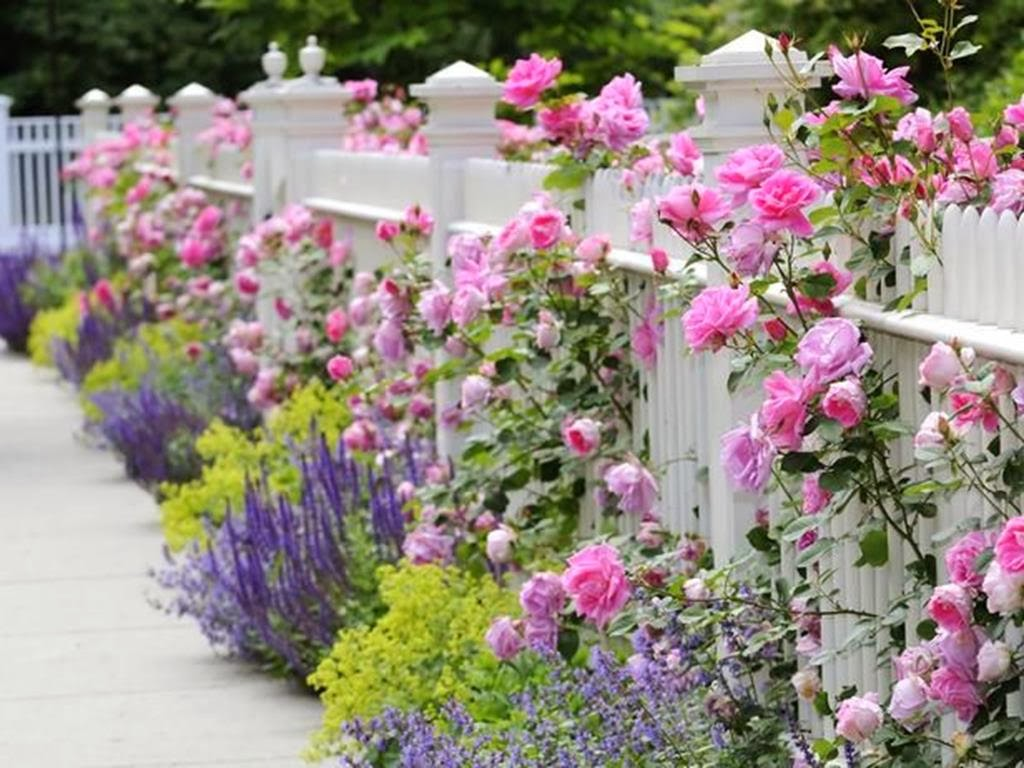Awesome Curb Appeal Landascaping With Pink and Purple Flowers Decor