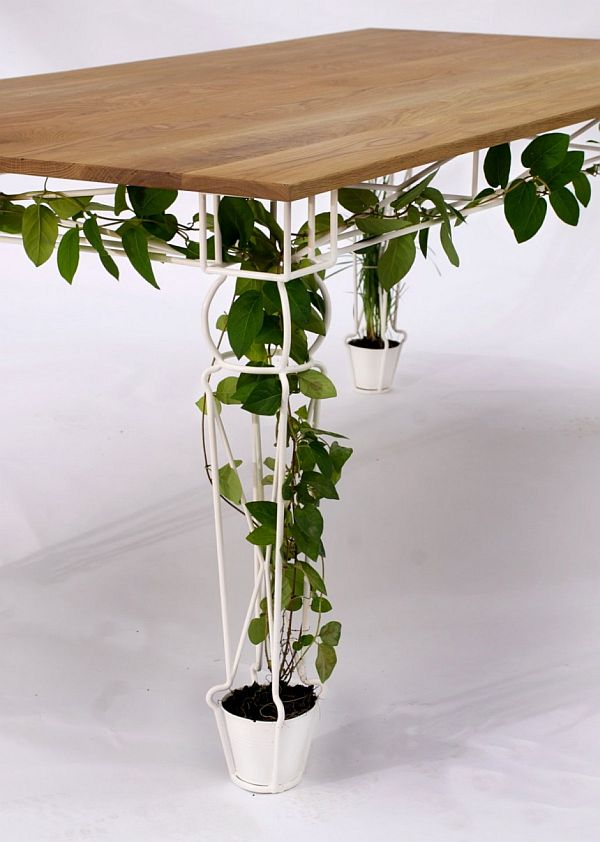Horrible Indoor Flower Pots For Vine Plant To Decorate Dining Table